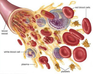 blood-cells6-638
