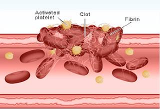 platelet 13